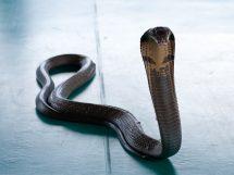 rêver de serpents